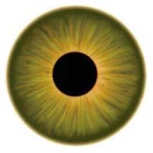 EMDR eye movement desensitization & reprocessing therapy