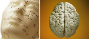 REMAP acupressure effects on the brain