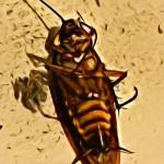 Roach Phobia Insect Phobia Bug Phobia